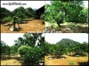 thumb_4434_ipohagriculturelandforsaletambun(l00494).jpg