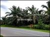 thumb_5611_sungaisiputsungaiplusjalongagriculturelandforsale(l00602)1.jpg